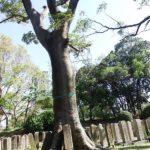 戦跡を訪ねる【大阪・旧真田山陸軍墓地】 1